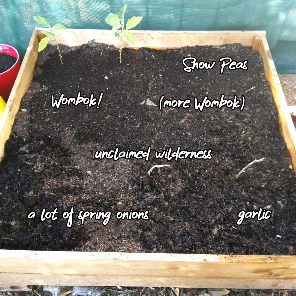A photo of my garden bed. Several areas have been marked out with the following labels: Snow Peas; Wombok!; (more Wombok); unclaimed wilderness; a lot of spring onions; garlic. There are tow unmarked plants in one corner